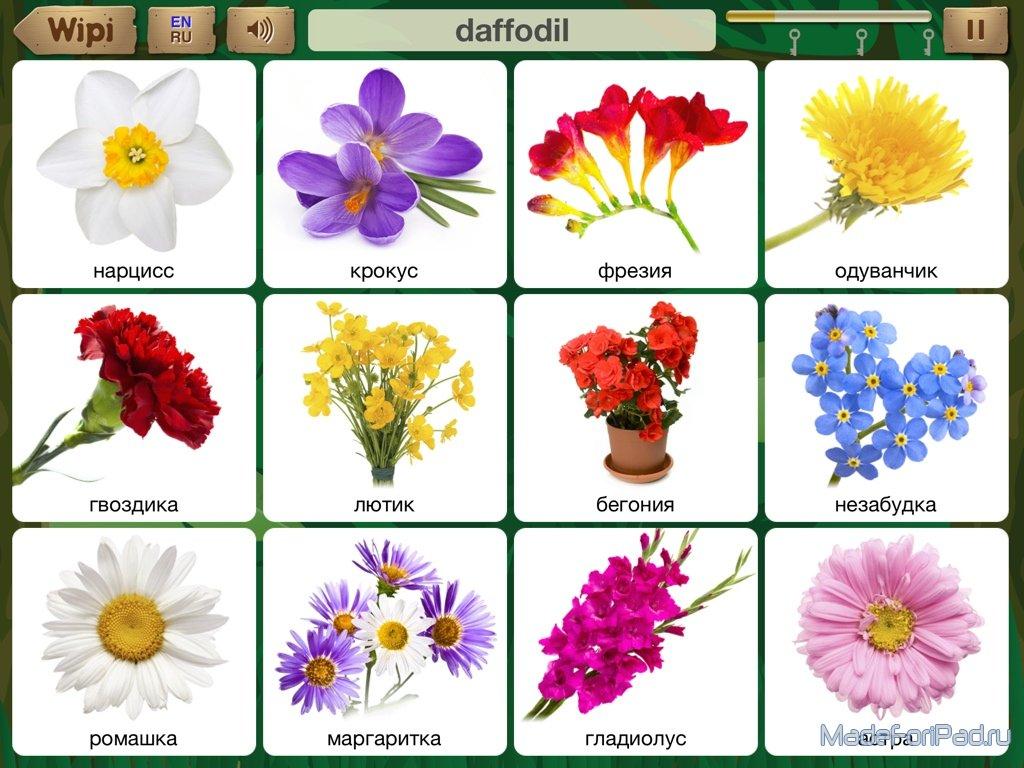 Красивый цветок перевод на английский