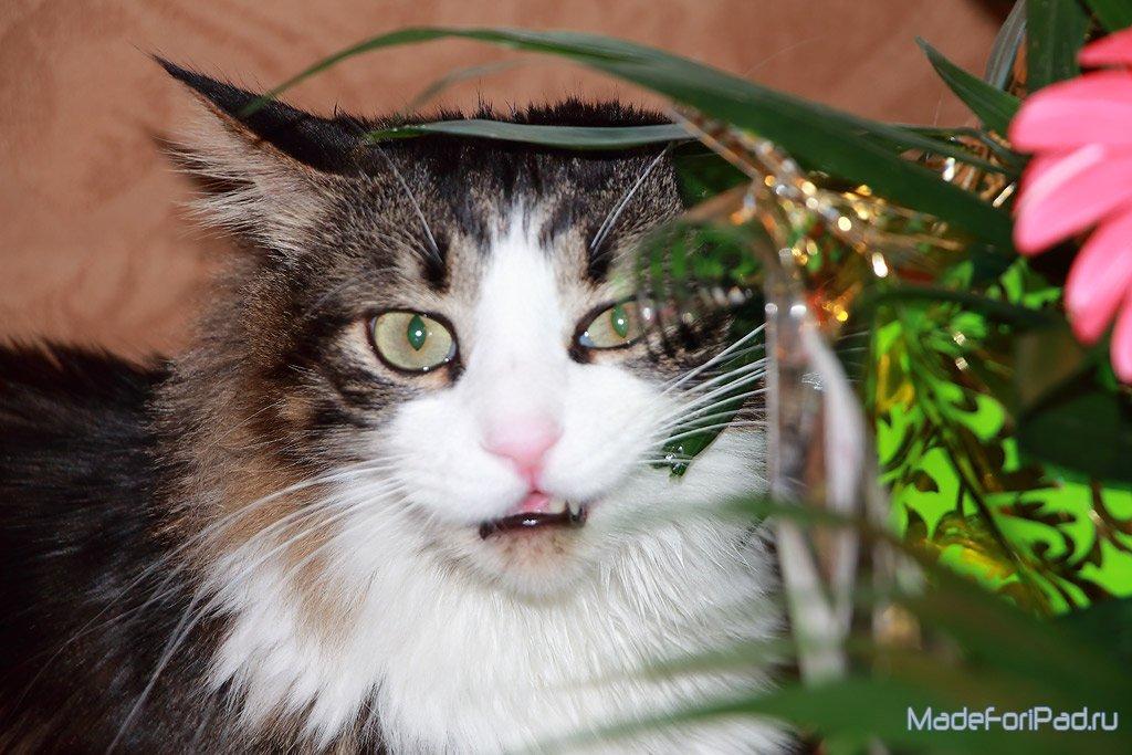 язык кота переводчик